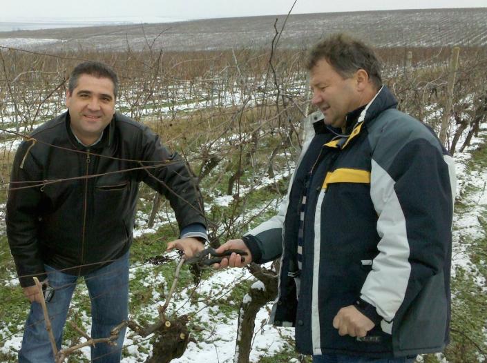 Razvan Macici la primul contact cu via de la Murfatlar, aici impreuna cu tehnologul sef Liviu Teleanu