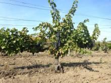 plantatie BN