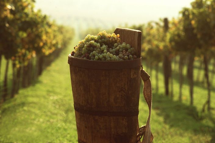 vin unguresc