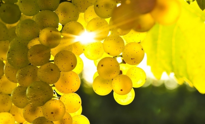 Grapes-Yellow-Sun-Light-1