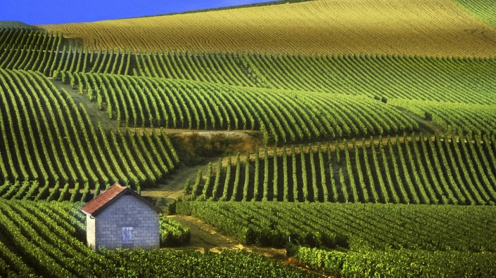 vineyards-champagne-view