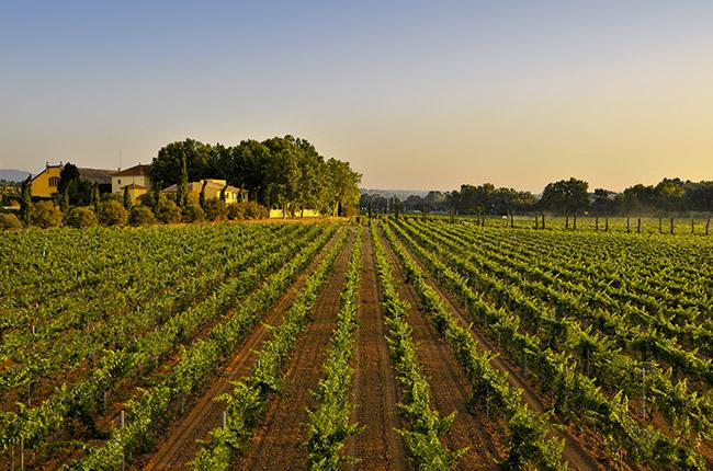 Torres-sparkling-wine