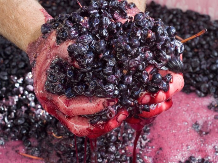 hands-in-red-ferment-schwartz-wine-co-barossa-1024x768